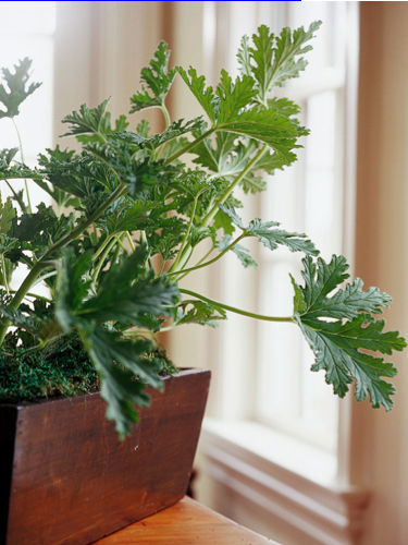 Houseplants as Home Décor